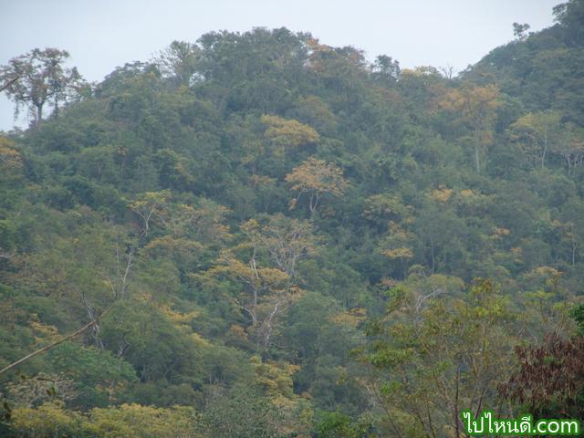 ป่าในเขาใหญ่