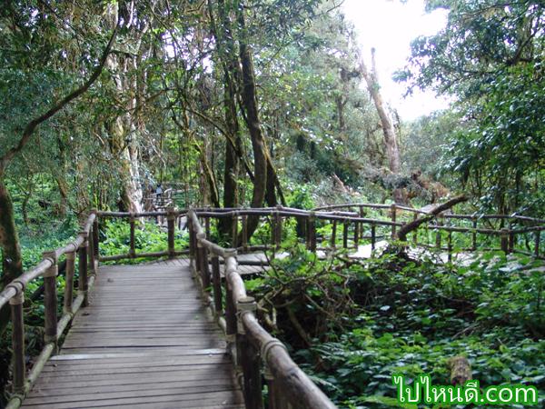 เส้นทางเริ่มต้น การเดินป่า
